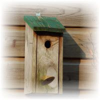 vogelhuisjes bouwtekeningen